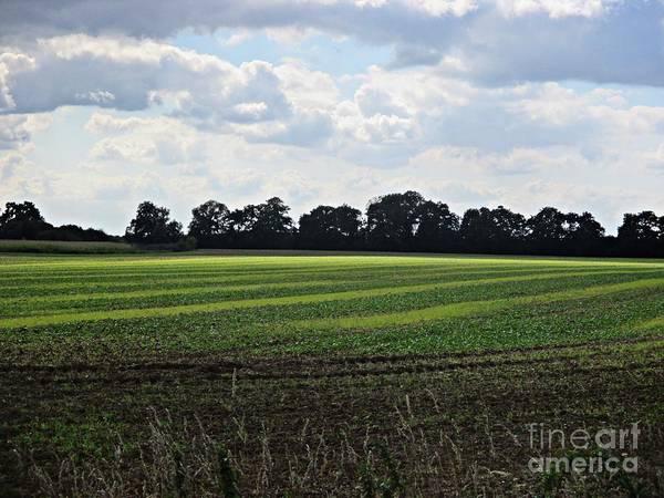Photograph - Field Near Coswig by Chani Demuijlder