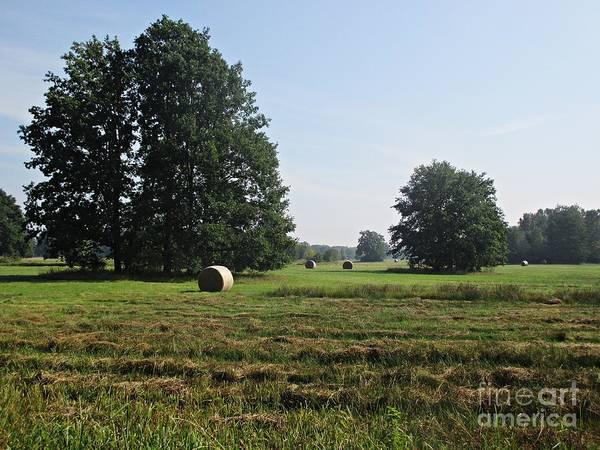 Photograph - Field Near Oranienbaum by Chani Demuijlder