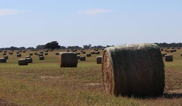 Wall Art - Photograph - Field Of Bales by Weathered Wood