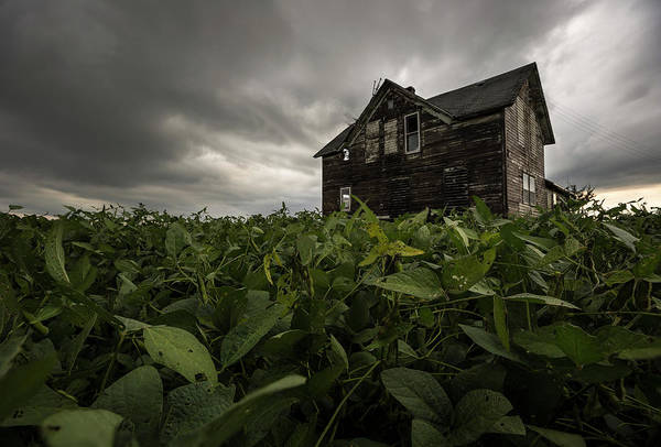 Photograph - Field Of Beans/dreams by Aaron J Groen