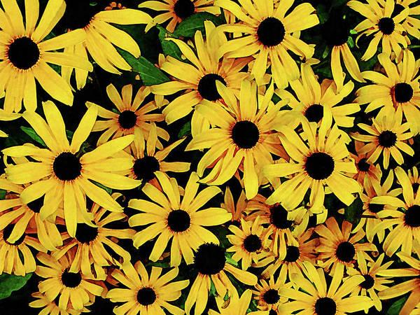 Photograph - Field Of Black-eyed Susans by Susan Savad
