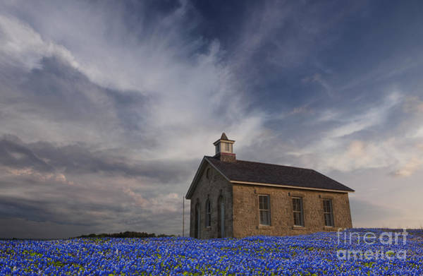 Photograph - Field Of Blue Bonnets by Keith Kapple