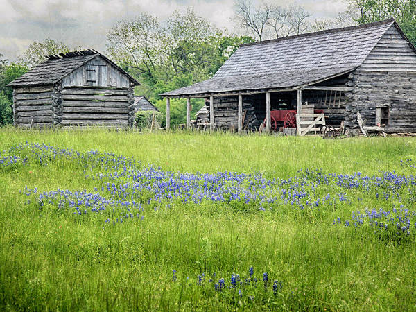 Photograph - Field Of Blue by Charles McKelroy