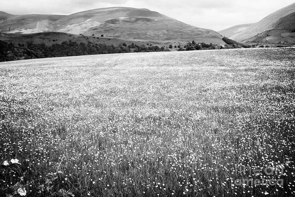 Wall Art - Photograph - Field Of Buttercups Growing In Farmland Under Crop Rotation Underskiddaw Keswick Cumbria England Uk by Joe Fox