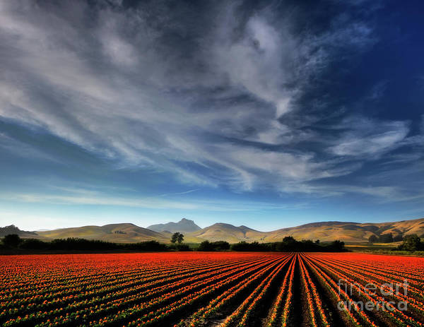 Photograph - Field Of Color by Beth Sargent