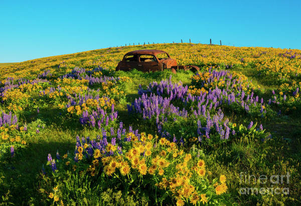 Wall Art - Photograph - Field Of Color by Mike Dawson
