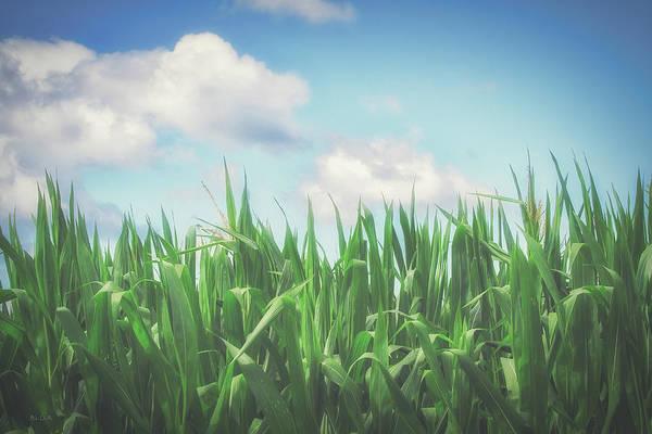 Photograph - Field Of Corn by Bob Orsillo