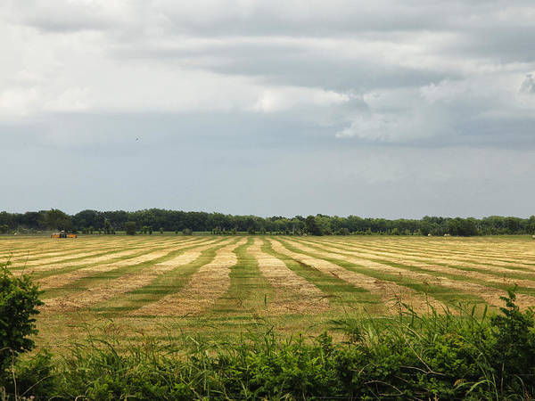 Photograph - Field Of Cut Hay by Charles McKelroy