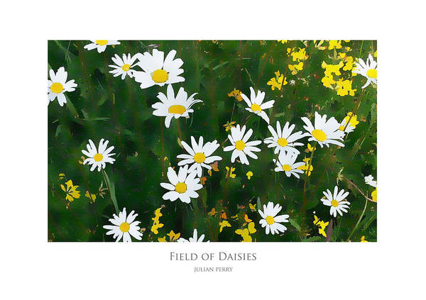 Field Of Daisies Art Print