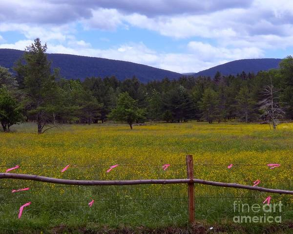 Photograph - Field Of Dandelions by Donna Cavanaugh