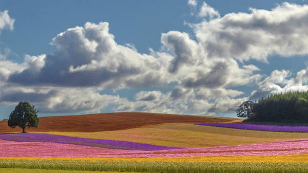 Photograph - Field Of Dreams by Wes and Dotty Weber