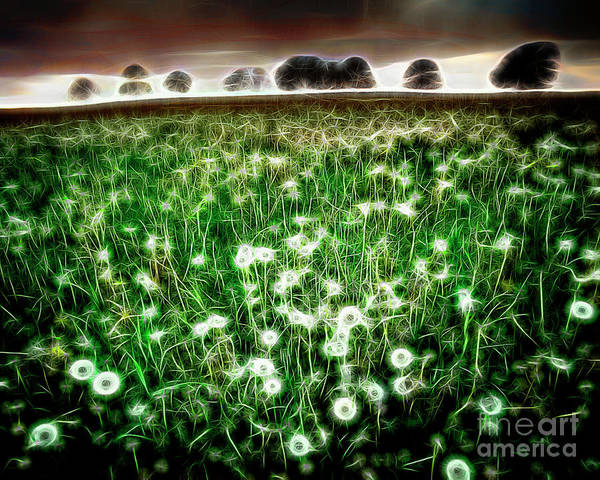 Photograph - Field Of Dreams by Edmund Nagele