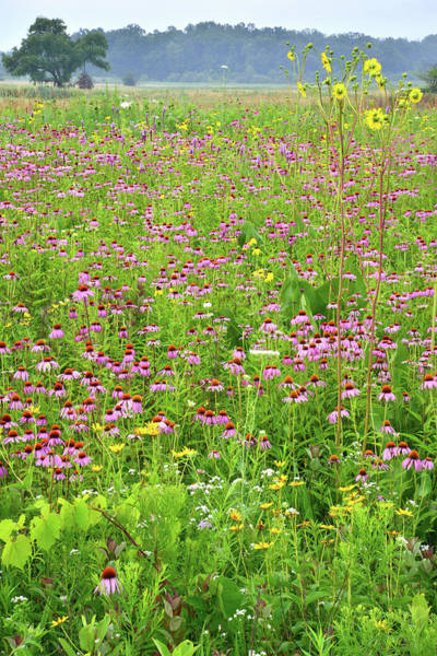 Photograph - Field Of Dreams In Chain-o-lakes Sp by Ray Mathis
