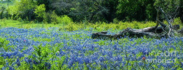Texas Bluebonnet Digital Art - Field Of Dreams Texas Bluebonnets by Elijah Knight