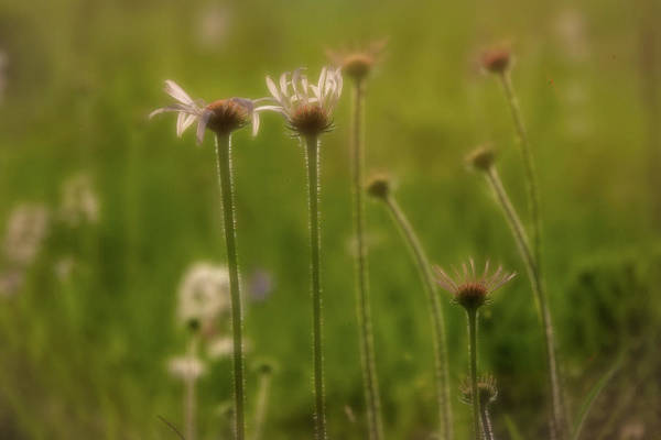 Photograph - Field Of Flowers 2 by Patricia Cale