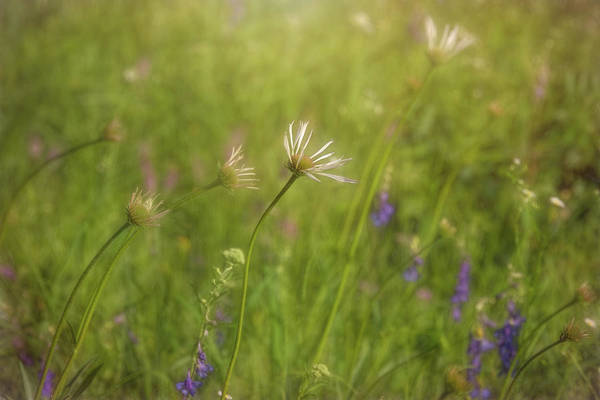 Photograph - Field Of Flowers by Patricia Cale
