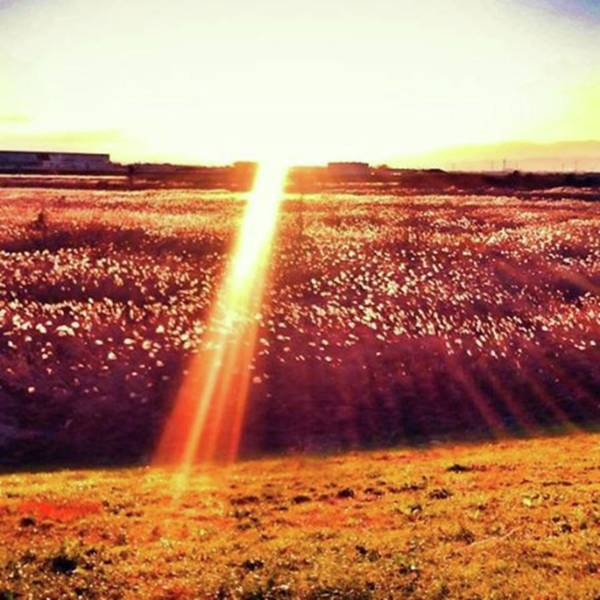 Strong Wall Art - Photograph - Field Of Gold by Nori Strong