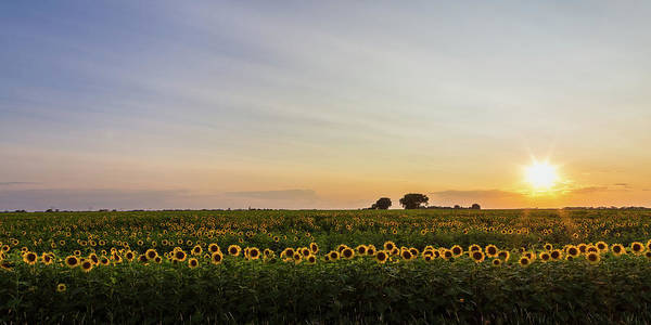 Aspect Wall Art - Photograph - Field Of Gold by Penny Meyers
