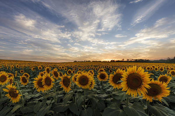 Midwest Photograph - Field Of Gold by Scott Bean