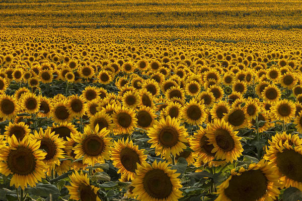 Photograph - Field Of Happiness by Scott Bean