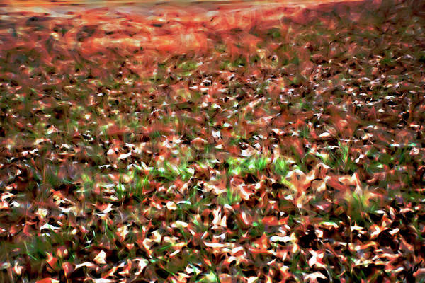 Photograph - Field Of Leaves by Gina O'Brien