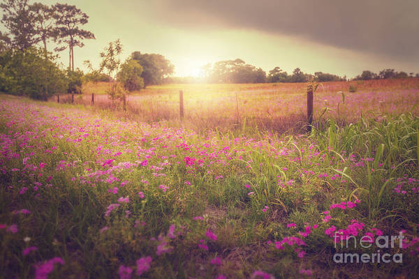 Photograph - Field Of Pink by Tim Wemple