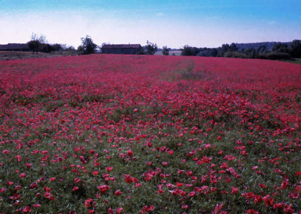 Photograph - Field Of Poppies, France by Richard Goldman