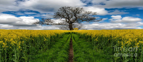 Photograph - Field Of Rapeseeds by Adrian Evans