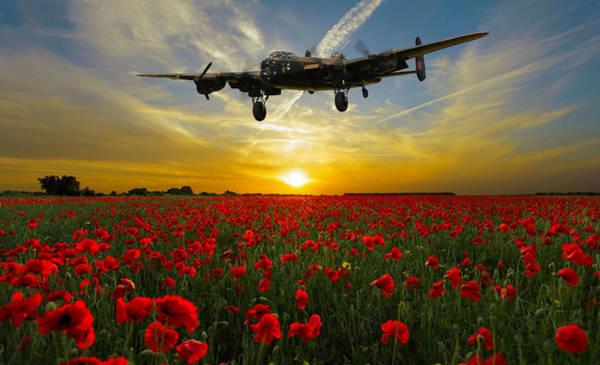 Poppies Digital Art - Field Of The Fallen by Mark Donoghue