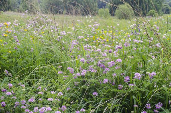 Photograph - Field Of Wildflowers by Lynn Hansen