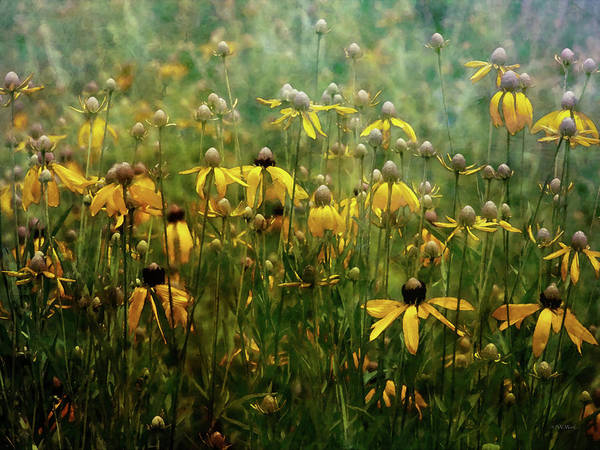 Photograph - Field Of Yellow 2498 Idp_2 by Steven Ward