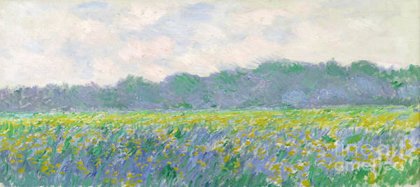 Plants Painting - Field Of Yellow Irises At Giverny by Claude Monet