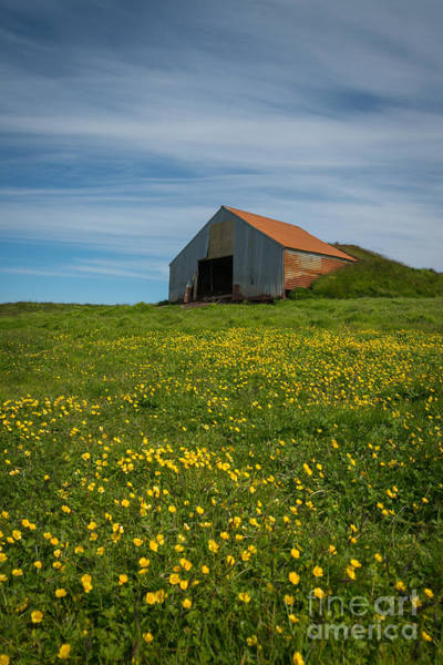 Field Trip Photograph - Field Of Yellow Vertical  by Michael Ver Sprill