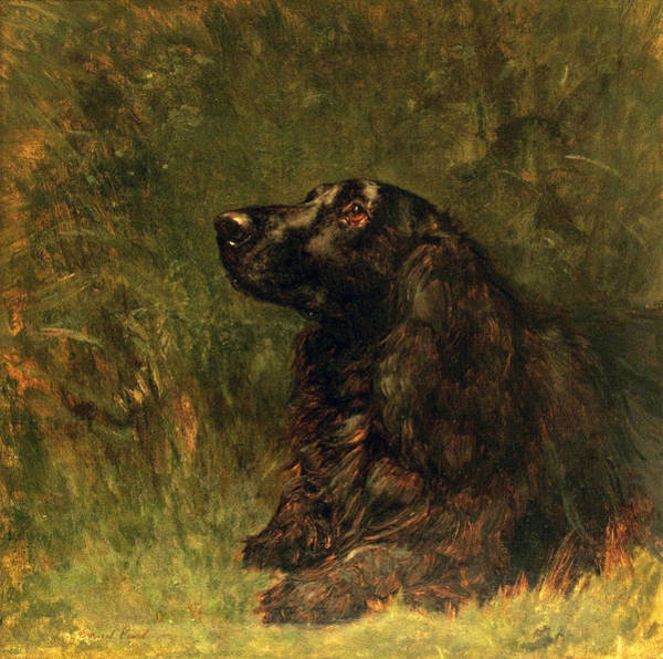 Field Spaniel Painting - Field Spaniel  by MotionAge Designs