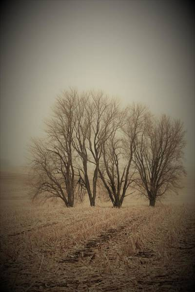 Wall Art - Photograph - Field Trees II by Toni Grote