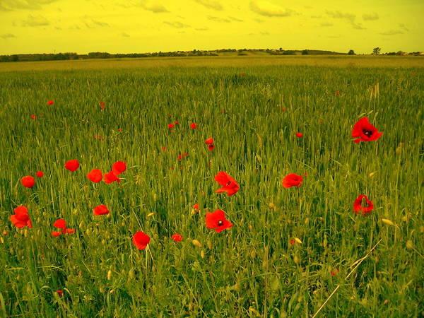 Gorecki Photograph - Fields And Poppies by Henryk Gorecki