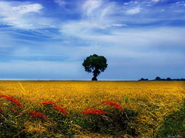 Photograph - Fields Of Gold by Bernd Hau