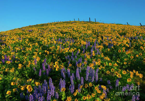 Wall Art - Photograph - Fields Of Gold by Mike Dawson