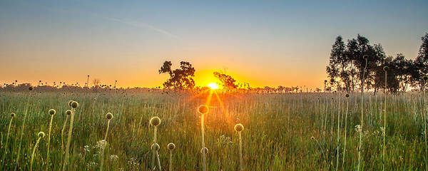 Weeds Photograph - Fields Of Gold Panorama by Az Jackson