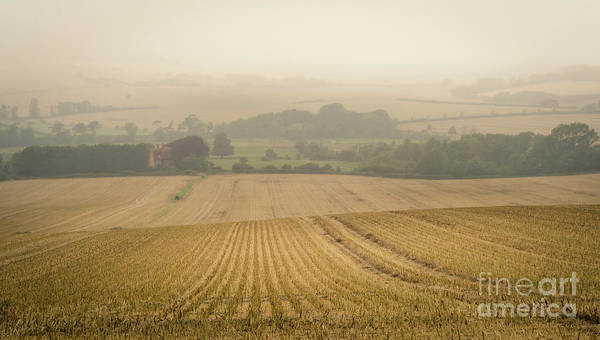Art Print featuring the photograph Fields Of Gold by Perry Rodriguez