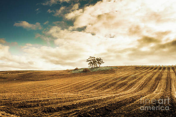 Cherry Photograph - Fields Of Tasmanian Agriculture by Jorgo Photography - Wall Art Gallery