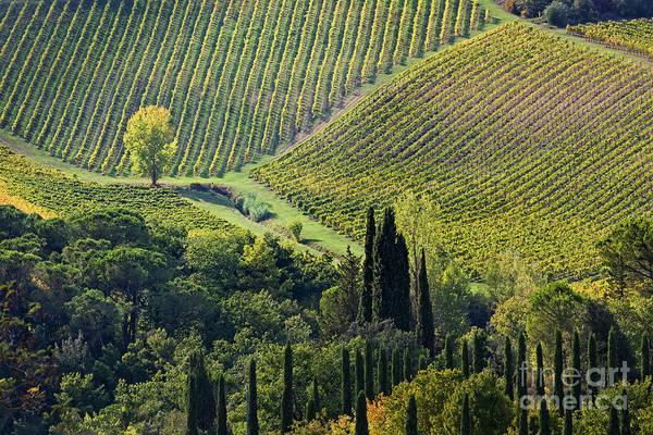 Photograph - Fields Of Tuscany by Scott Kemper