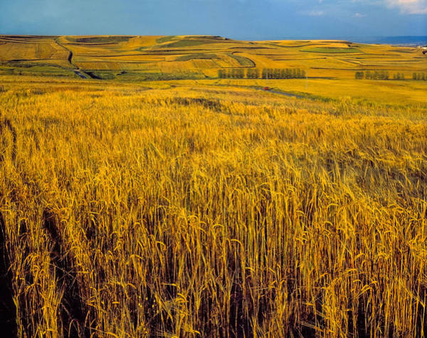 Barley Painting - Fields Of Wheat In Castile, Spain by Hans Schrodter