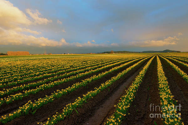 Rainbow Row Photograph - Fields Of Yellow by Mike Dawson
