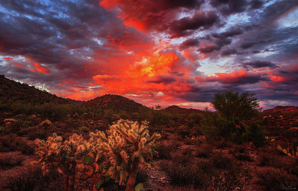 Photograph - Fierce Beauty by Rick Furmanek