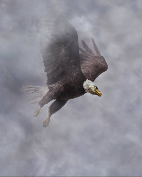 Flying Eagle Photograph - Fierce Pair 1 Of 2 by Betsy Knapp