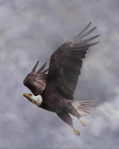 Flying Eagle Photograph - Fierce Pair 2 Of 2 by Betsy Knapp