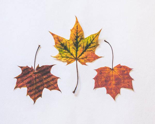 Fall Photograph - Fiery Beauty by Kate Morton