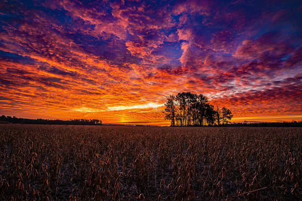 Photograph - Fiery Dawn At Center Grove by John Harding