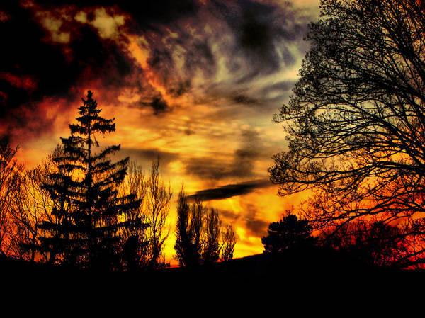 Fiery Forest Sunset Art Print